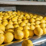 生産工場によって味が違うという檸檬堂のネット上の噂をまとめてみた