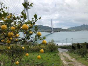 レモン谷から望む多々羅大橋