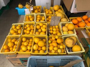 生月島の商店で売られているレモン