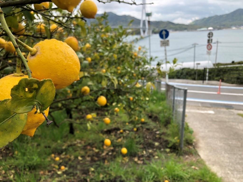 レモンの聖地・生口島