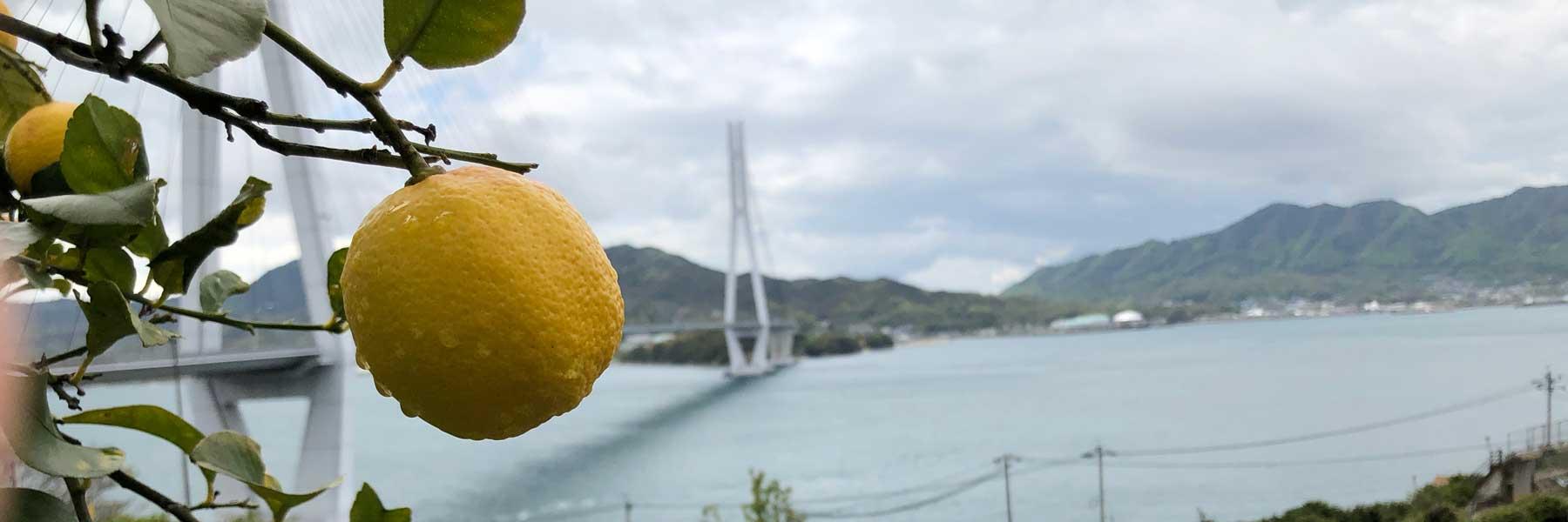 レモンの聖地、生口島に行ってレモンサワーを飲んでみた!